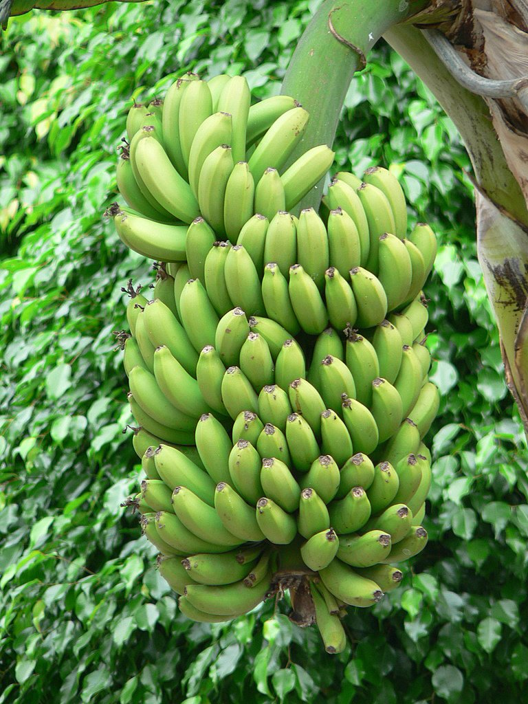 Earn Kes 600 000 A Year From Bananas Lawrence Selim