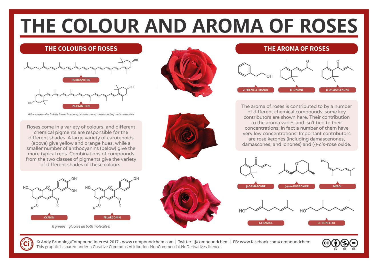 The-Chemistry-of-Roses
