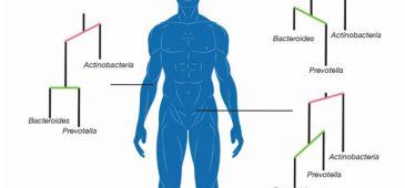 Human_Microbiome