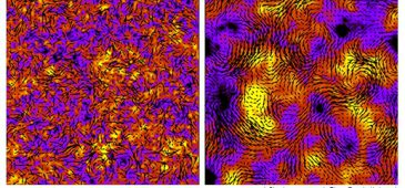 bacteria lund university
